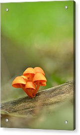 Acrylic Print featuring the photograph Orange Mushrooms by JD Grimes