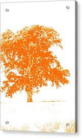 Orange Oak Acrylic Print by Alan Look