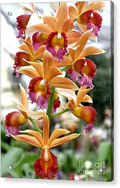 Acrylic Print featuring the photograph Orange Orchids by Debbie Hart