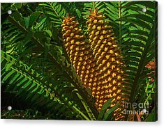 Orange Palm Hearts Acrylic Print by Herb Paynter