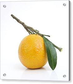 Orange Satsuma Acrylic Print by Bernard Jaubert