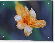 Acrylic Print featuring the photograph Orange Sickle by Tanya Tanski