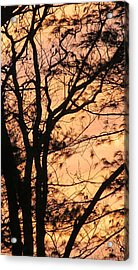 Orange Silhouette Acrylic Print