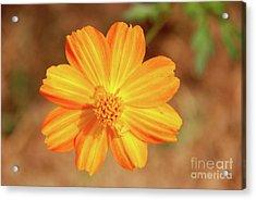 Orange Surbert Acrylic Print