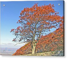 Acrylic Print featuring the photograph Orange Tree And Blue Sky by Shirin Shahram Badie