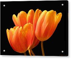 Orange Tulips On Black Acrylic Print