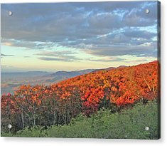 Orange Velvet In Shenandoah Acrylic Print by Shirin Shahram Badie