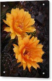 Orange You Beautiful  Acrylic Print by Saija  Lehtonen