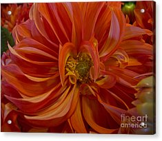 Orange You Happy Acrylic Print