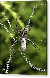 Acrylic Print featuring the photograph Orb Weaver by Joy Watson