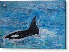 Orca Acrylic Print by Iris Gill