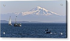 Orca's And Mt Baker Acrylic Print