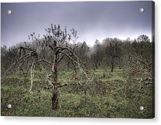 Orchard At Altapass Acrylic Print