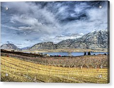 Orchards And Vineyards Acrylic Print by John  Greaves
