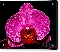 Orchid 14 Acrylic Print