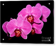 Orchid 17 Acrylic Print by Terry Elniski