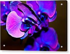 Orchid #2 Acrylic Print by David Alexander