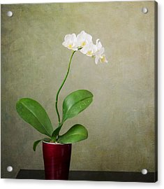Orchid 2 Acrylic Print by Mary Hershberger