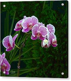 Orchid 2 Acrylic Print