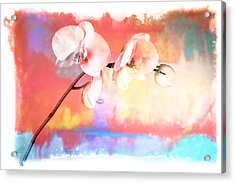 Orchid 3 Acrylic Print by Mauro Celotti