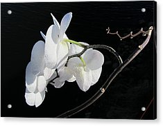 Orchid Above River Acrylic Print