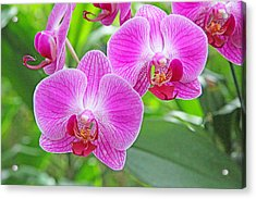 Orchid Beauty Acrylic Print by Becky Lodes