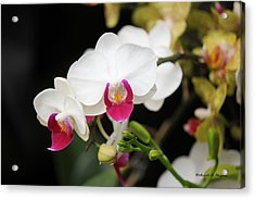 Orchid Buds Acrylic Print