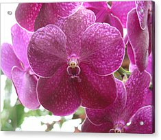 Acrylic Print featuring the photograph Orchid Cluster by Charles and Melisa Morrison