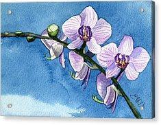 Orchid Acrylic Print by Eunice Olson