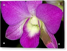 Orchid Flowers Of C Ribet Acrylic Print by C Ribet