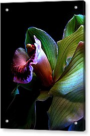 Orchid Gem Acrylic Print by Shirley Sirois