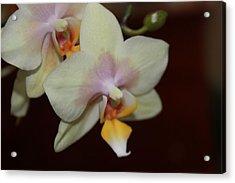 Orchid I Acrylic Print by Kelly Hazel