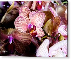 Orchid IIi Acrylic Print by Christopher Holmes
