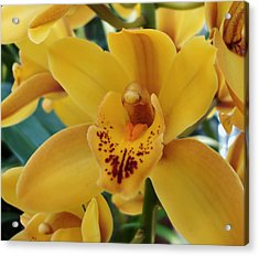 Orchid Acrylic Print by Kathleen Holley