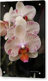 Orchid Perspective Acrylic Print