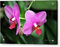 Orchid Purple Acrylic Print