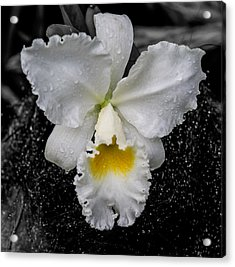 Orchid Shower Acrylic Print