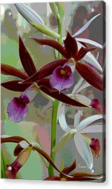 Orchid Sonata Acrylic Print by Suzanne Gaff