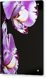 Orchid Stem Acrylic Print by Phyllis Denton