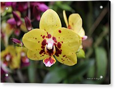Orchid Tie Dye Acrylic Print