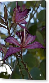 Orchid Tree Acrylic Print by Joseph Yarbrough