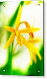 Orchid Vi Acrylic Print by Floyd Menezes