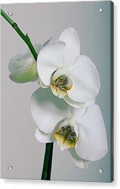 Orchidee Acrylic Print by Falko Follert