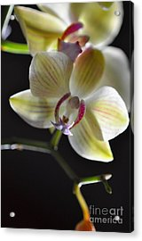 Orchidee Acrylic Print by Sylvie Leandre