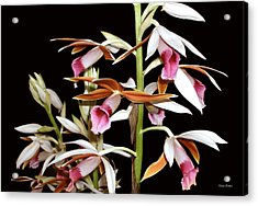 Orchids 006 Acrylic Print by George Bostian