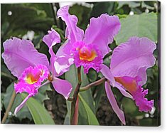 Orchids 14 Acrylic Print by Becky Lodes