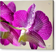Orchids And Raindrops Acrylic Print by Theresa Willingham