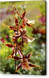 Acrylic Print featuring the photograph Orchids Catching Morning Sunshine by Kerri Ligatich