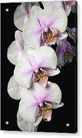 Orchids Acrylic Print by David Chapman