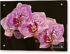 Acrylic Print featuring the photograph Orchids by Eunice Gibb